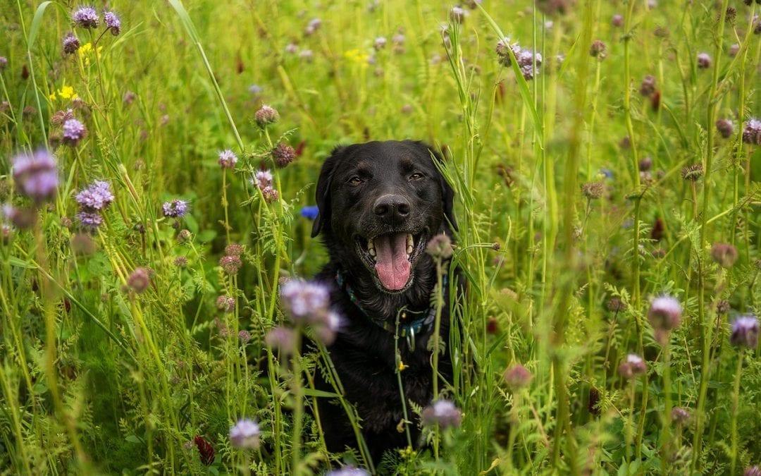 Symptoms of Seasonal Pet Allergies