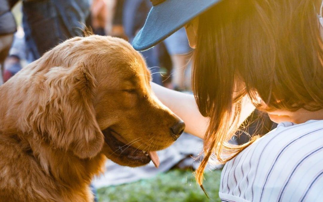 Deciphering Your Dog's Body Language