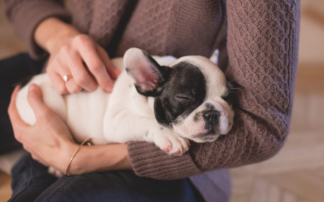 Caring for Your Pet's Emotional Well-Being