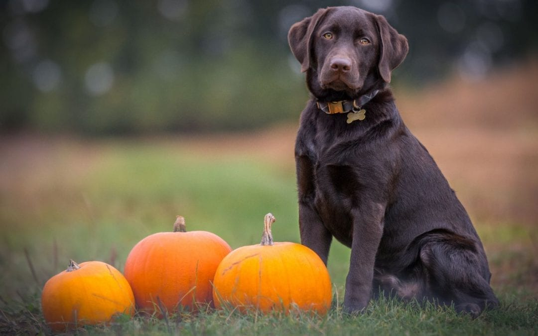 Top 5 Halloween Horrors For Pets