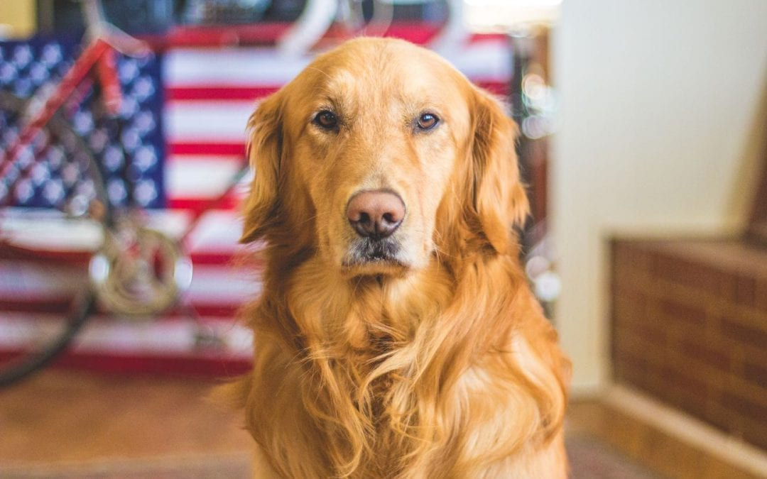 Keeping Your Pet Calm on Fourth of July