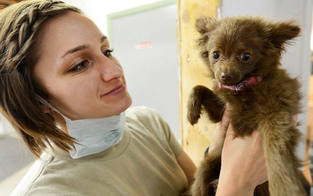 National Veterinary Technician Week