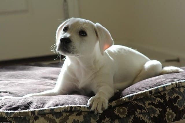 puppy after pet wellness plan visit